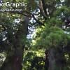 世界遗产 熊野古道 大门坡