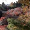 小原的红叶和四季樱